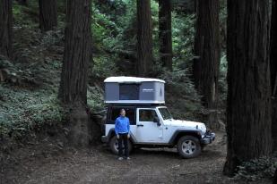 Maggiolina Redwoods