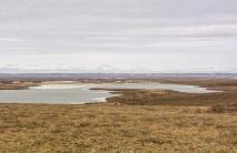 Northern Arctic Tundra